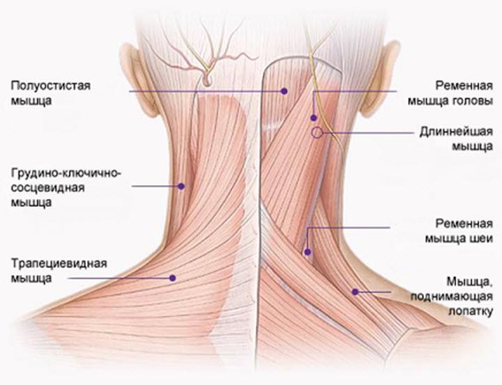 Мышечное напряжение