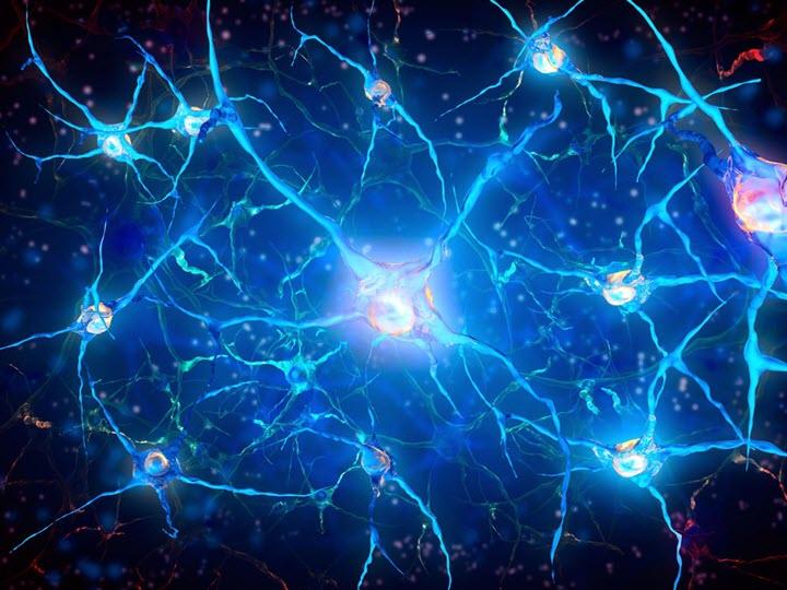 Показатели головного мозга