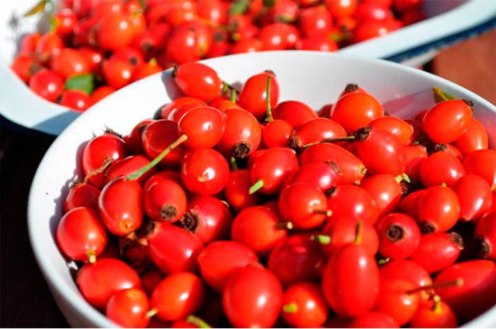 Плоды шиповника при атеросклерозе