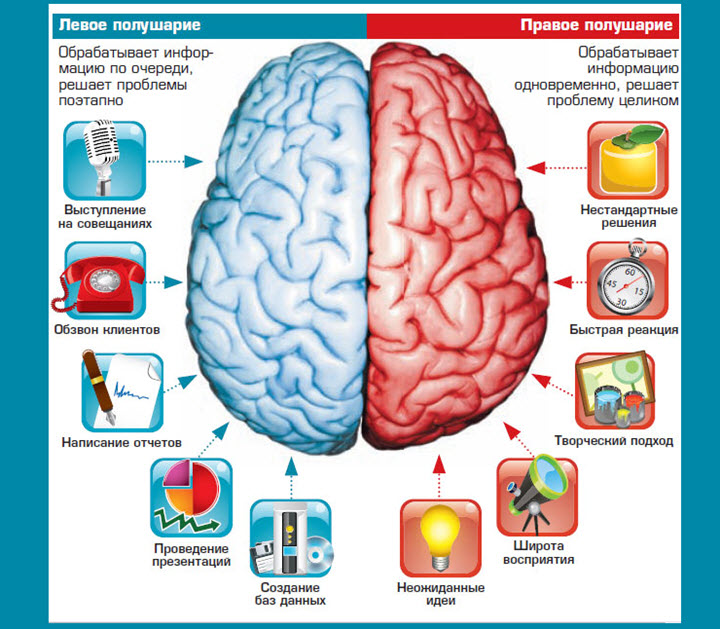 Right Brain VS Left Brain Functions  Owlcation