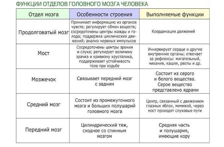 Таблица функций отделов мозга
