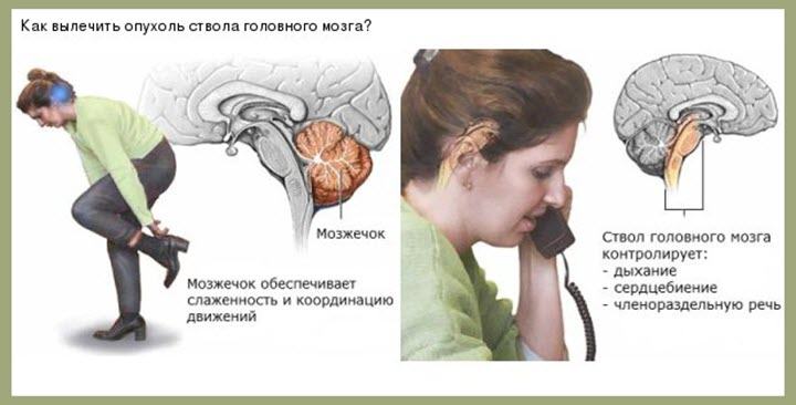 Функции мозжечка и ствола головного мозга