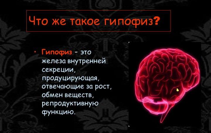 Что такое гипофиз