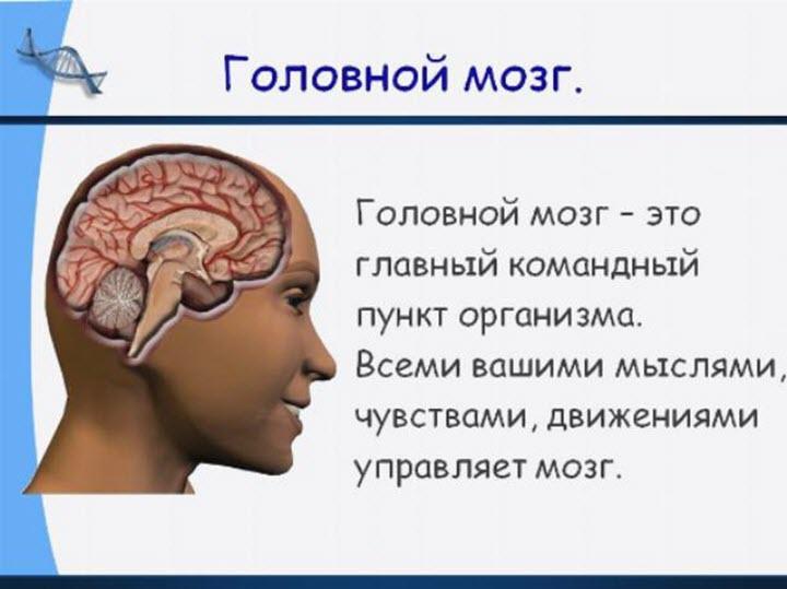 Что такое головной мозг